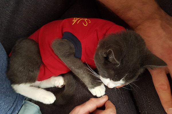 Poes medical pet shirt